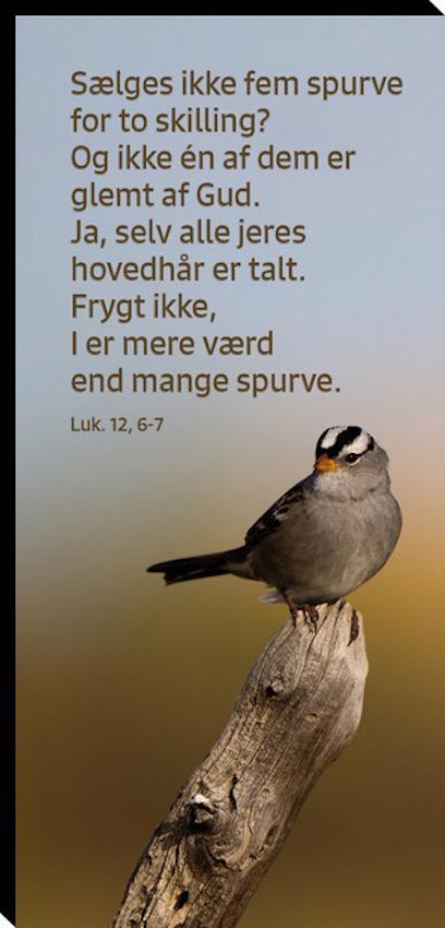 Lukas 12, 6-7 Image